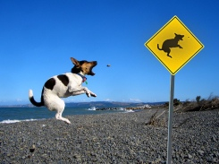 dog jumping barking at a sign