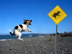 dog jumping barking at a sign