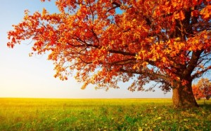 Autumn-Trees-Images-High-Definition-480x300