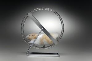 hamster whell