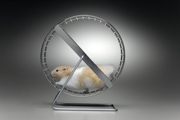 a Hamster Wheel